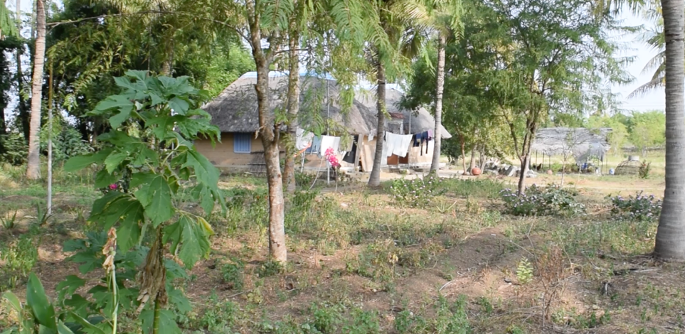 Payir Grounds, India